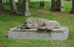 """This is a sandstone sculpture of a Newfoundland by Henry Dexter in 1854 """"guardian of the grave"""" he forever watches over the grave of Henry and Lucinda Barnard in Forest Hill Cemetery, 95 Forest Hills Avenue Boston, MA 02130"""
