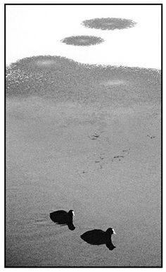 Water in #Naarden. #gooisemeren