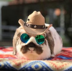 Shop the cutest miniature sunglasses for pet rabbits or bunnies at #BunnySupplyCo | Discover the cutest costumes, outfits, & accessories for your small pet + Free Shipping with every purchase! | #bunnies #rabbits #cuteanimals #cutepets #rabbitsupplies