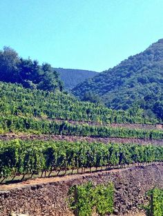Viticultura heroica #RibeiraSacra #Lugo #Ourense #Spain by @CeciliaBabarro via Twitter