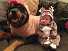 Sweet babies! #rottweiler #dog