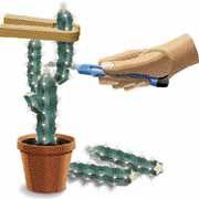 Bouturages des Cactus