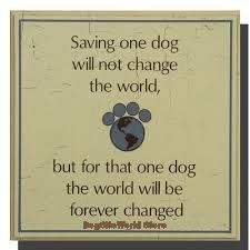 Dogs World is dogs of the world, world of dogs, dogs world breeds is a description of the many world dog breeds and world breeds describing many breeds of dogs throughout the world, although not necessarily preferred the world dog breeds of the respective countries. Selection of Dog Supplies for all Dog Breeds can be purchased at affordable prices at DogSite World. DogSiteWorld Store - http://DogSiteWorld.com