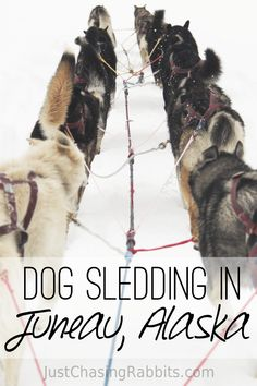 We flew to Herbert Glacier via helicopter for a dog sledding adventure in Juneau, Alaska where we learned about the sport and the dogs themselves. Juneau Alaska, Alaska Travel, Travel Usa, Alaska Usa, Alaska Trip, Dog Sledding Alaska, Alaskan Dog, Alaska Adventures, Viewing Wildlife