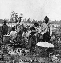 1860  Slaves picking cotton  Pre-Civil War