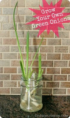 Grow your own green onions? Awesome.