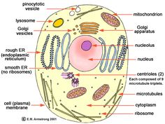 Parts of an Animal Cell (C1, W3)