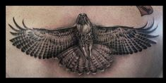 hawk tattoos for women black and grey | Cory Norris - black and grey hawk