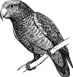 силуэт попугая: 51 тыс изображений найдено в Яндекс.Картинках