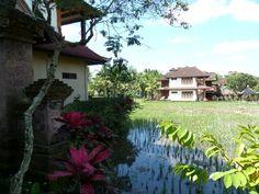 Bo omringet af rismarker på Bali