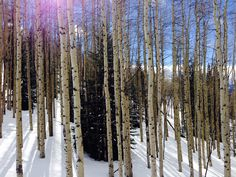 into the woods Vail Mountain, Mountain Style, Woods, Trees, Snow, Outdoor, Outdoors, Forests, Outdoor Games