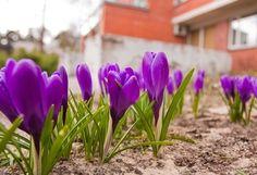 Annuals vs. Perennials: The Epic Gardening Decision