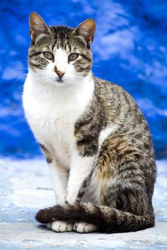 Very pretty cat! A cat often feels insecure when its tail is wrapped around its paws.