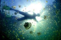 Jellyfish Lake, Palau, Micronesia.