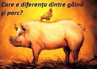 poveste gaina si porc