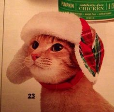 I need a cat so I can buy this ridiculous hat
