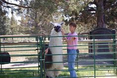 The panel is your friend! When working with llamas and alpacas always work in a catch pen approximately feet and position your animal along the panel to help the animal keep his balance. Farm Family, Llama Alpaca, Alpacas, Small Farm, Farm Animals, Homestead, More Fun, Training, Dreams