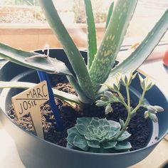 Jardiner en intérieur Gardening Mama Croix Chatelain Bonsaï, Aloe ...