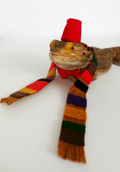 Bearded Dragon Clothing.. Dr. Who Set! By GetSTUFT on Etsy