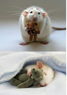 a mouse with a teddy bear