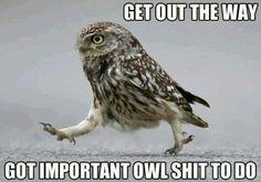little owl doing owl shit - Google Search