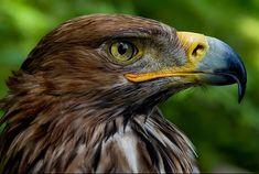 Hawk http://ift.tt/2I60AaR