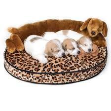 puppies accessories - Szukaj w Google