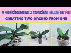 CIĘCIE ORCHIDED, UZYSKANIE 2 ORKI Z 1 ORCHIDY - YouTube Phalaenopsis Orchid Care, Orchid Plants, Garden Wallpaper, Orchids In Water, Small Garden Landscape, Minimalist Garden, Gardening Apron, Interior Garden, Gras