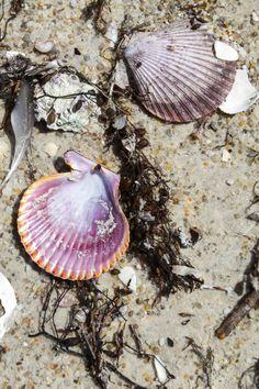 Shells at The Hazards beach in Tasmania