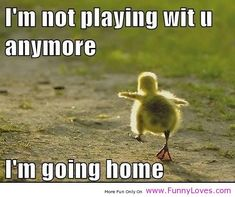chicken funny saying | Chicken in vendor beautiful funny quotes funny loves fun world | Women ...