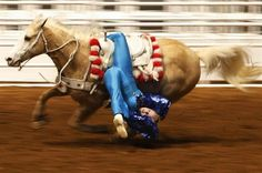 A stunt rider performs at the Rodeo held as part of the Stock Show in Fort Worth, Texas January REUTERS/Jessica Rinaldi Fort Worth Stock Show, Show Cattle, Sports Pictures, Show Horses, Livestock, Stunts, Cows, Athletics, Rodeo
