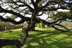 The Sallier Oak of is around 400 yrs old. Girlfriends Getaway, New Orleans Travel, Lake Charles, Cajun Recipes, Weekends Away, Red River, Big Hugs, Wonderful Places, Trees To Plant