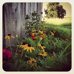mornings in the country | Morning in the country ☀