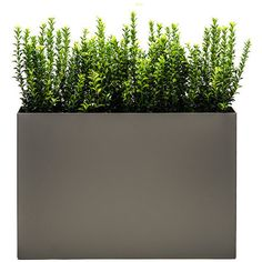 Modern Trough Planter, Dove, Low ❤ liked on Polyvore featuring home, outdoors, outdoor decor, fillers, plants, modern garden decor and modern planters