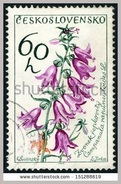 61e6-ceskoslovensko-circa-stamp-printed-in-czech-czechoslovakia-shows-creeping-bellflower-151288619.jpg (364×555)