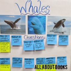 All About Books: ROUND ONE! Blog Post about Informational Writing in a first grade classroom!