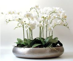 Orchids of sophistication and understated glamour. Orchid Flower Arrangements, Orchid Planters, Orchid Centerpieces, Orchid Pot, Flower Vases, Dendrobium Orchids, Orchid Care, White Orchids, Plant Decor