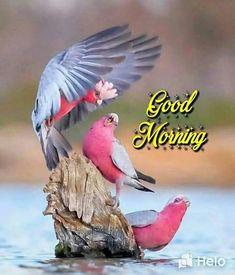 Good Morning Images For Whatsapp, Beautiful Good Morning Images For Whatsapp, Good Morning Shayari, Good Morning Smiley, Good Morning Happy Sunday, Good Morning Gif, Good Morning Flowers, Good Morning Picture, Morning Pictures, Good Morning Wishes, Blessed Sunday, Morning Morning
