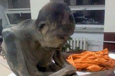 El Universal - Ciencia - Hallan momia de monje budista en