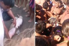 Dolphin pulled out of the ocean for selfies