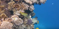 Coral Reef Pictures, Herbs, Water, Outdoor, Gripe Water, Outdoors, Herb, Outdoor Games, The Great Outdoors