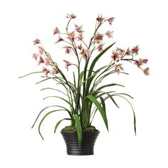Faux Potted Cymbidium Orchid