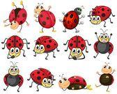 Lindas mariquitas — Vector de stock Ladybug Cartoon, Snoopy, Cute, Fictional Characters, Tin, Cookies, Google, Funny Cartoons, Bug Games
