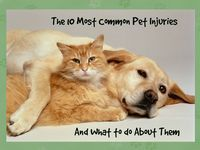 (Image source: thepossiblecanine) No matter how careful we are as pet parents, accidents happen. Whether it's something minor, like a torn nail, or something more significant, like a snake bite, the time to prepare yourself is now. Pet-proof your home...