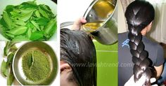 Homemade Magic Hair Growth Oil – Healthy, Thick And Long Hair - Time For Natural Health Care Natural Hair Growth, Natural Hair Styles, Long Hair Styles, Homemade Hair Growth Oil, Hair Due, Best Hair Oil, Long Hair Video, Pelo Natural, Magic Hair