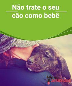 Tratar um cão como bebê, saiba porque isso é ruim  Podemos acreditar que estamos certos ao tratar um #cão como #bebê, mas o cão não entende e, além disso, isso acarretará #problemas. #Adestramento