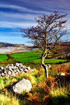 Gypsy Autumn Romance| Serafini Amelia| ♕ | Autumn field in Clare Burren, Munster, Ireland |