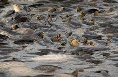 Karpfenzeit: Fischen wie im Mittelalter – Seite 3 | Lebensart | ZEIT ONLINE