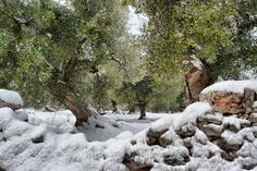 #Snow in Ostuni! Follow me on 500px, fb or pinterest! https://www.facebook.com/LucillaCumanPhotography