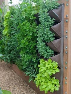 "Patio-size herb garden - all you do is hang up the canvas ""garden"", fill with potting soil and plant herbs. Drains well, works great. Great apartment garden..."
